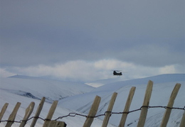 A Chinnock. It was right down in the valley above the A93, but it took me a while to get my camera out :-(