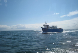 Boat trip around the Farnes (from our boat)