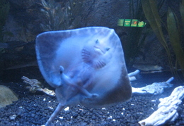 Odd looking fish @ Sealife Centre